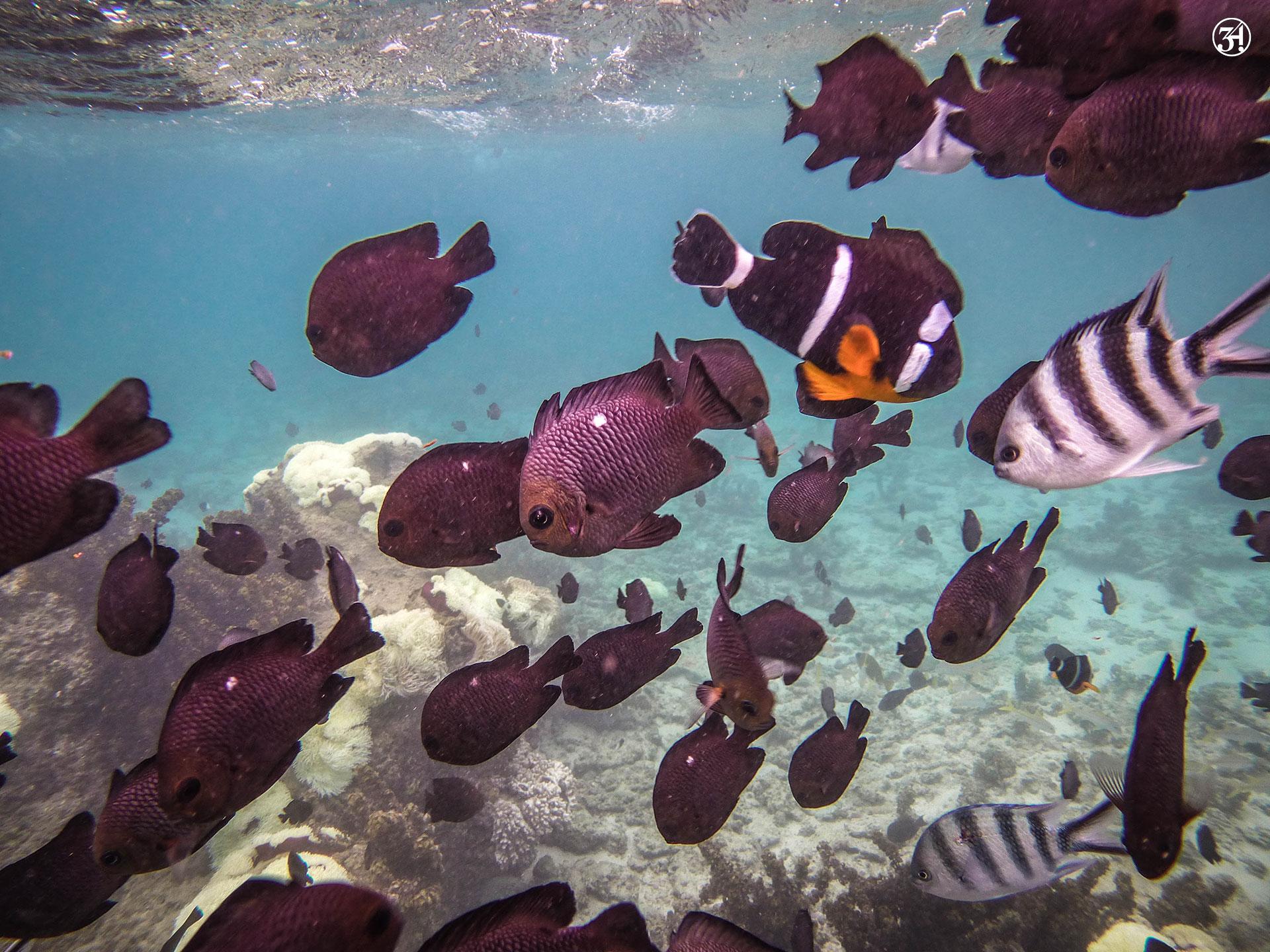 Jase34 - Travel: Mauritius